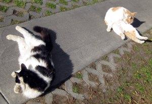 cat-groom