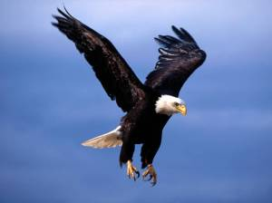 eagle-fearsome_flight-1024x768