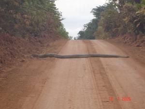 SnakeAcrossRoad
